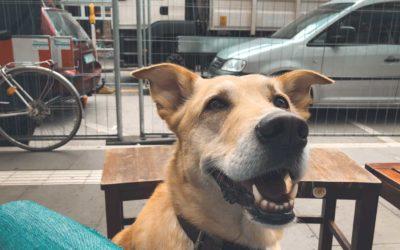 Klare Kommunikation mit Hund